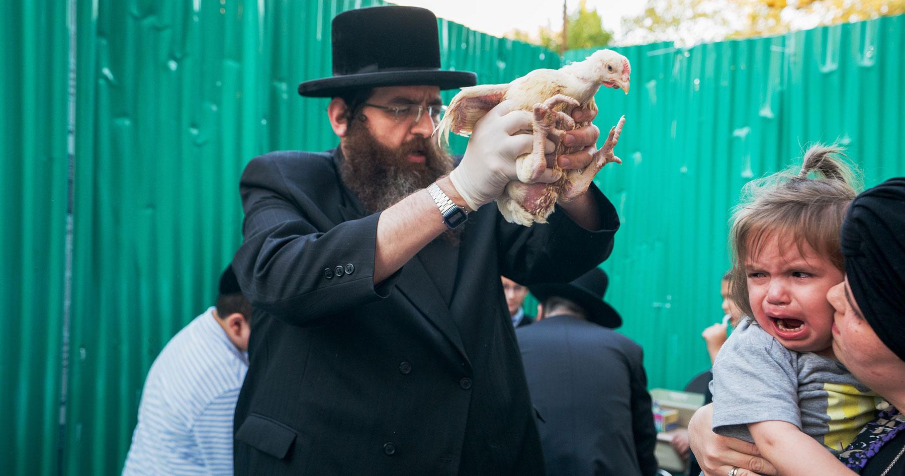 Kaporos ritual terrifies child and chicken