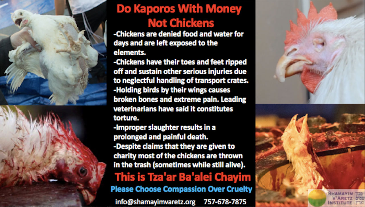 Do Kaporos With Money Not Chickens flyer in English