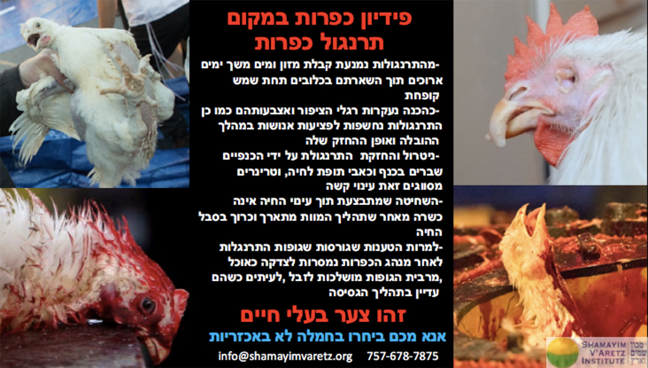 Do Kaporos With Money Not Chickens flyer in Hebrew