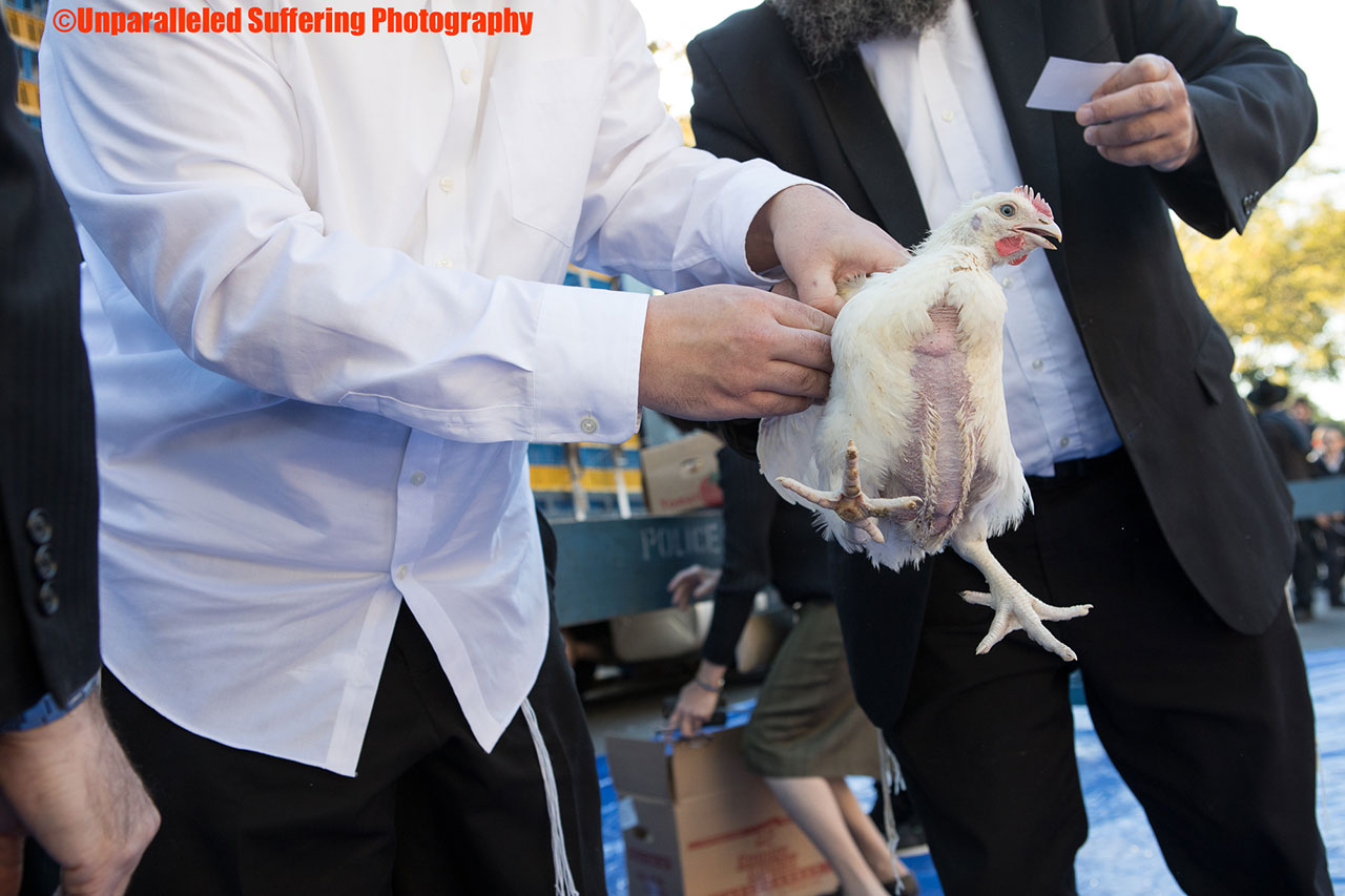 A chicken being held over a Rabbi's head